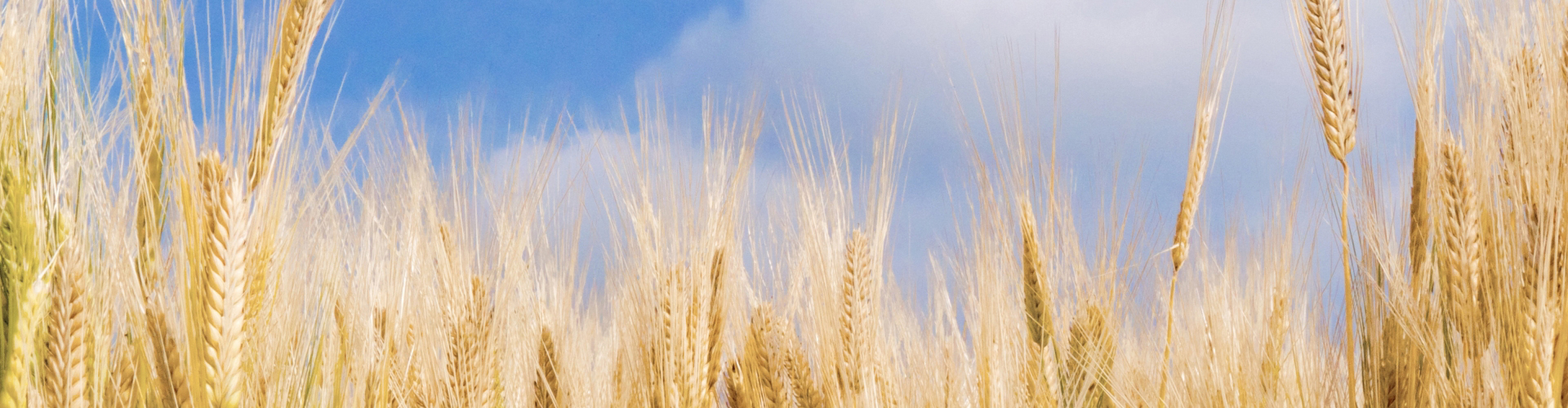 安全・安心な小麦粉を提供しています。